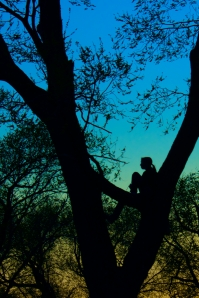 Silhouette in a Tree